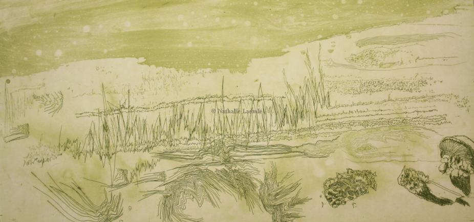 Algues lunaires / Lunar algae